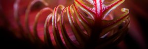 Red fern frond